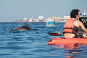 Kayak with dolphins Tenerife