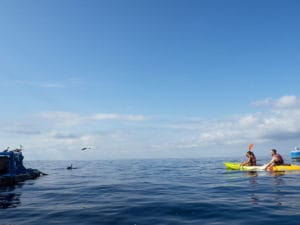 kayaking with dolphins Tenerife