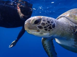 snorkeling with turtles Tenerife - Boat tours