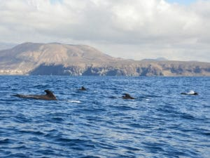 Whale watching Tenerife - Boat tours