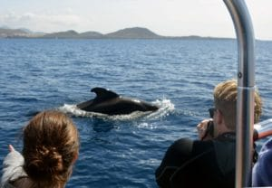 Whale watching Tenerife