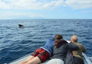 Close encounter - whale watching Tenerife